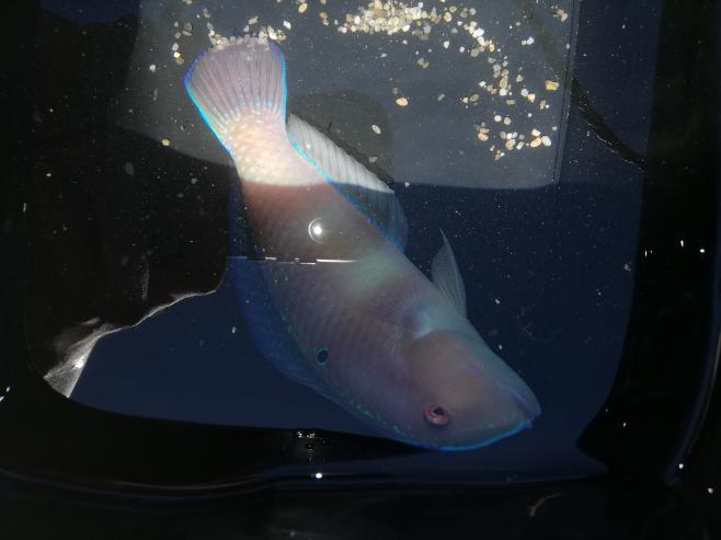 少し画像が見にくいですがこの魚の名前は何ですか?