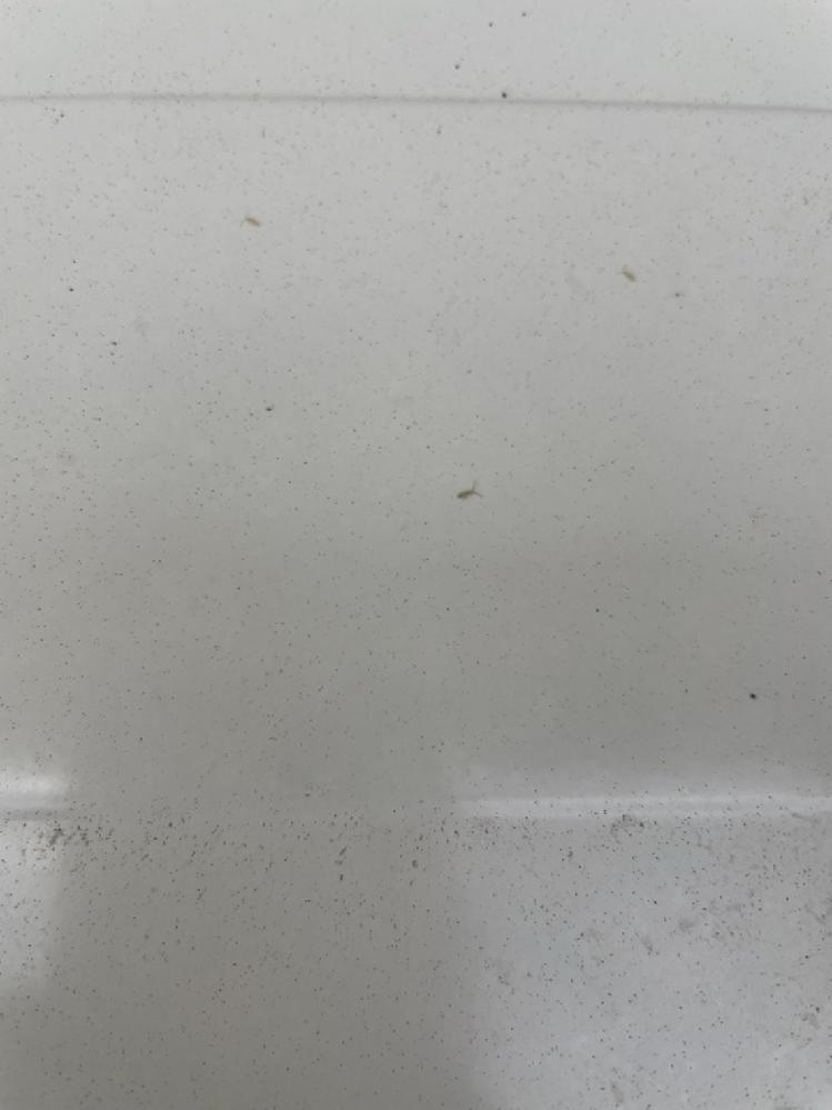 室外機の上に虫が大量に発生しました。 この虫が何という虫か教えてください。