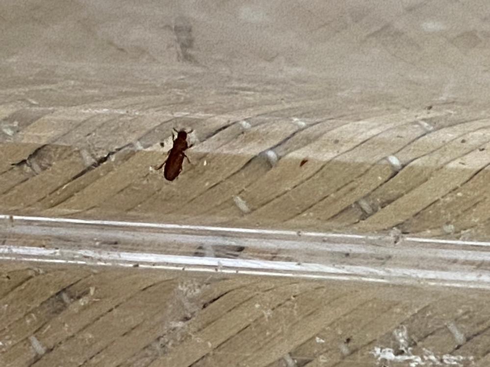 この虫の名前何でしょうか