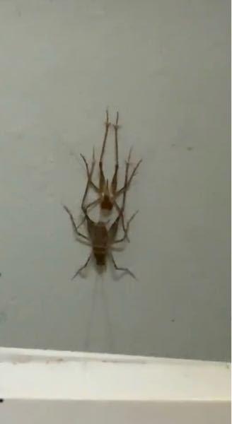 バイト先にこの虫がいたのですがなんの虫なのでしょうかまた害はあるのでしょうか