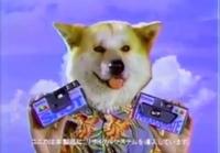 この犬種は、コーギーでしょうか?