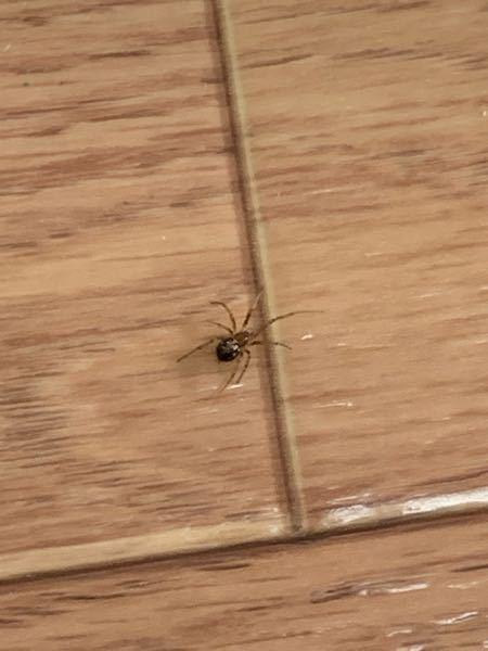 これなんていうクモですか