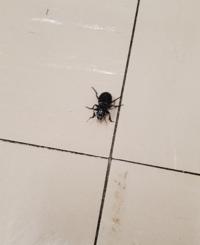 先日この虫を見つけたのですが、ヒョウタンゴミムシかゴミムシモドキか分からずウズウズしております。 宜しければ名前を教えて頂けないでしょうか?