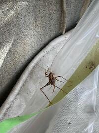昆虫に詳しい方よろしくお願いします。 これは何という虫でしょうか?