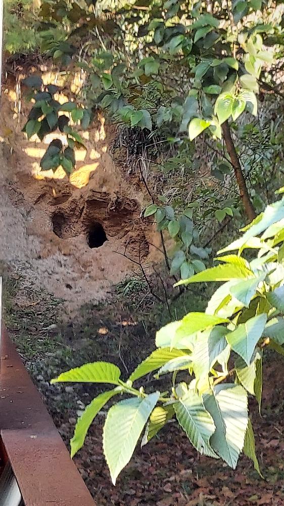 山の草刈りをしていたら、こんな穴が開いていました。何かの巣穴でしょうか。 だとしたらもうその動物はここを使えなくなってしまうでしょうか。 どなたか分かる方がおられたら教えて下さい。