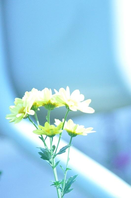 この花の名前を教えて下さい キク科だとは思いますが・・・・