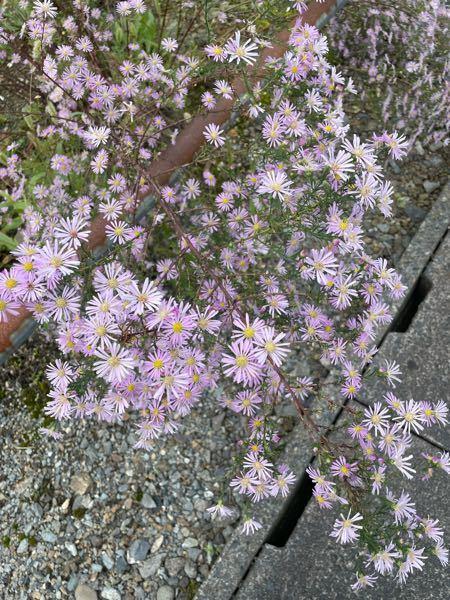 この花は何の花か分かりますか?