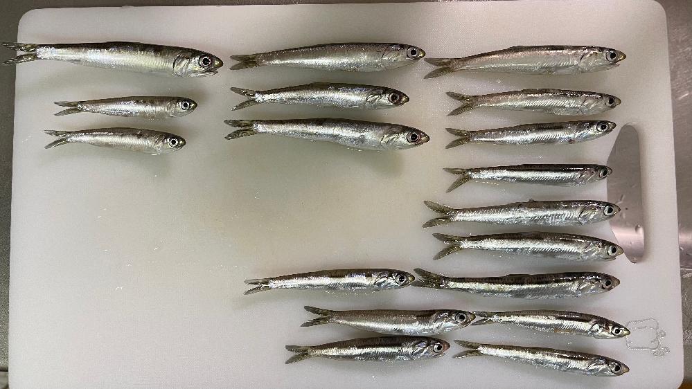 自分なりに分けたんですが全部同じ魚でしょうか? イワシでしょうか? 詳しく教えて頂きたいです!