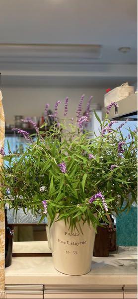 画像あり。よろしくお願いします。 よく見る花なのにどうしても名前が思い出せずモヤモヤしています。