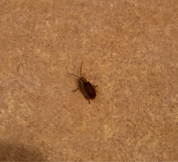 これは何の虫ですか?