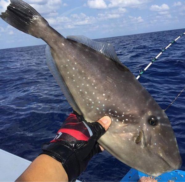 この魚はなんですか? 毒あるか心配なのですが大丈夫ですか