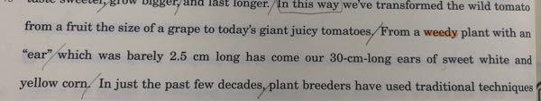 この文の、From a weedy...yellow corn.の文の主語と述語はどうなりますか?