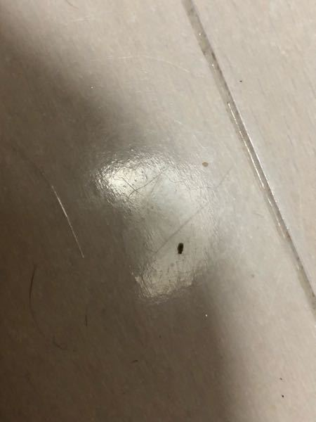 閲覧注意?虫の画像貼ってます。 この虫なんの虫か分かりますか… もうやだっ//////♡ ……真面目に教えてください… このままじゃ昼しか眠れませんよ… 見えにくくてすみません。 薄だいだいっぽい感じの色で、0.2mmくらいの大きさでした。 もうぴえんです。へるぷです。きゃー