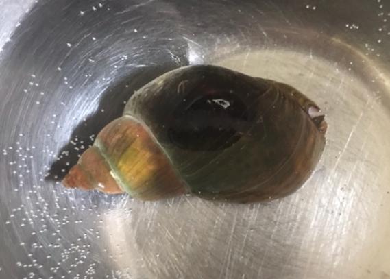 この貝の名前を教えてください。食べる事は可能でしょうか。