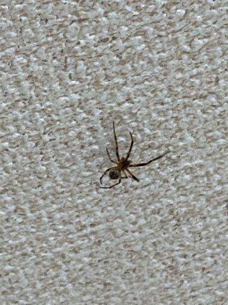この蜘蛛は放置しても大丈夫ですか?