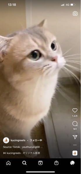 この猫の品種はなんですか?