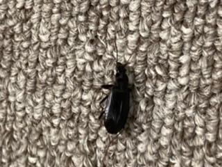 この虫は何と言う名前でしょうか? 噛まれてとても痛いです。よろしくお願いします。
