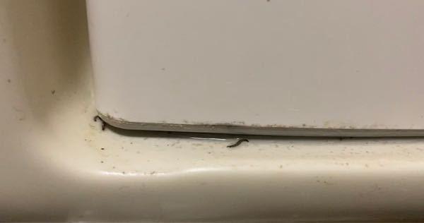 虫について質問です! 写真に写ってる黒い糸状のものがうねうね動いてます… ムカデにしては小さいかと… なんでしょうか? ちなみに洗面台の歯ブラシ置き場にいました!