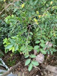 この植物の名前は何ですか?