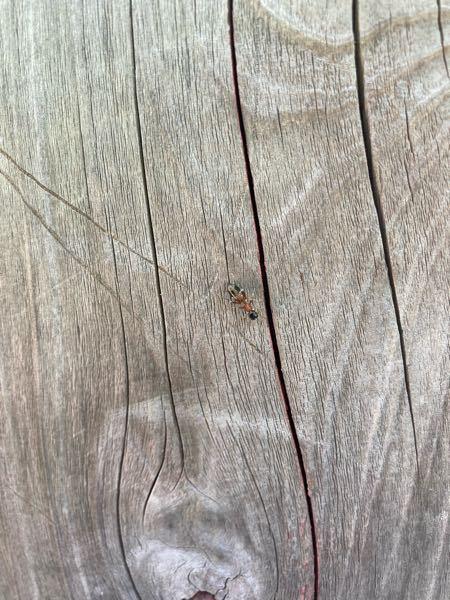 これってヒアリですかね?? 詳しい方教えて下さい。