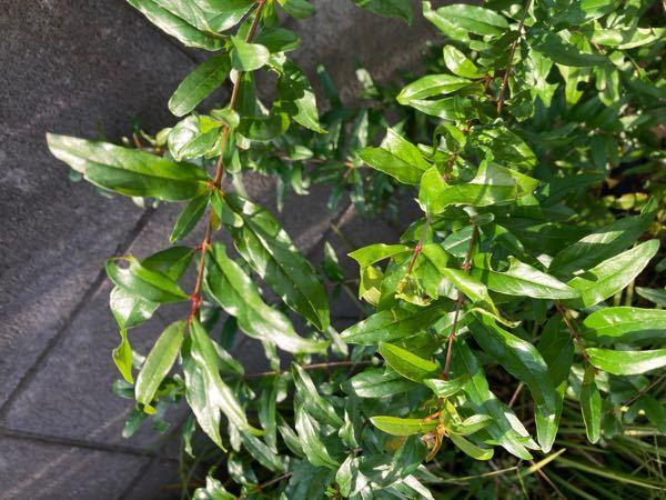 この木はなんですか? 花壇に生えてきました。
