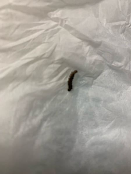 たまに部屋の天井や壁にいます。 この虫は何ですか。