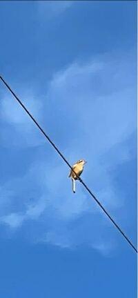 この鳥の名前を教えてください。昨今山の畠に行くと警戒音を発します。巣が近くにあると思います。小鳥たちも随分大きくなってきたようです。