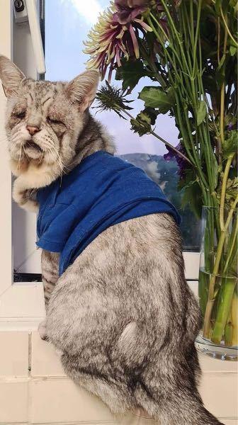 この猫、何という種類でしょうか? 今まで見たことのない生き物でびっくりしました。