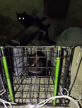 1万円以内の赤外線防犯カメラないですか。 猫違いで保護主さんが怒ってます。 預かった黒猫が逃亡して10日、毎晩猫ボラさんが見回り罠をかけて、ようやく昨夜黒猫が罠に入りました。 深夜保護主さん宅へお届けに伺うと「うちのクロちゃんじゃない…クロちゃん授乳中のお母さんなのに、これはオスじゃないの」と認めてくれません。 本日猫ボラさんが動物病院でオスメス診察してもらう予定ですが、赤外線防犯カメラないんですか。 毎晩毎晩もう限界です。