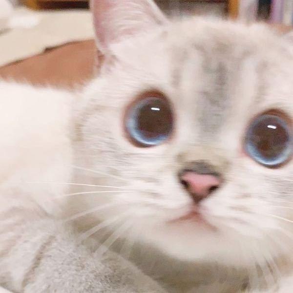 この猫ちゃんの飼い主さんのSNS知っている方いませんか?