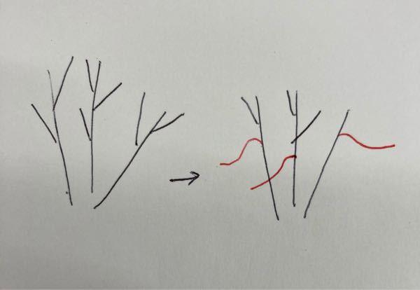 シマトネリコの枝が地面と水平な伸びます。 画像のように、普通は上に伸びるであろう枝が、横に伸びています。 素人剪定のせいなのでしょうか。 これらはもう切った方がいいですよね?