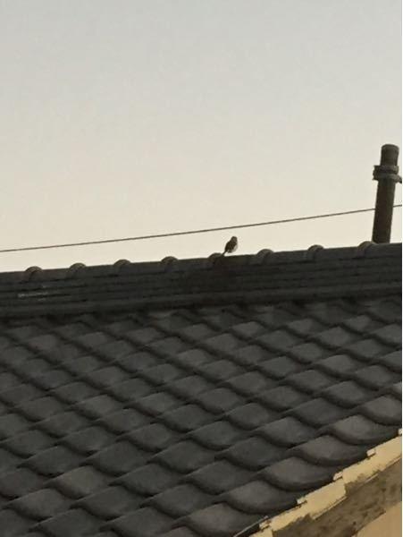 夕方になるとやってくるこの鳥は何という鳥ですか?