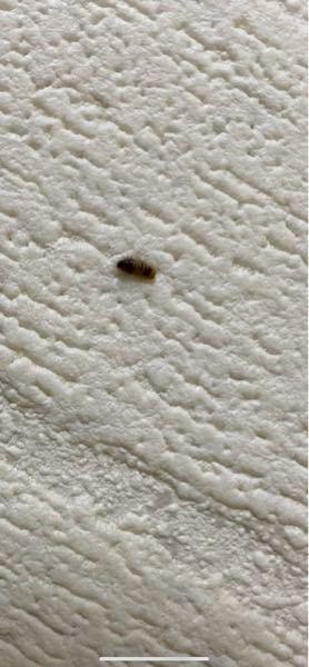 この虫なんですか?よく家で見るんですけど絶妙に嫌です。教えてください!