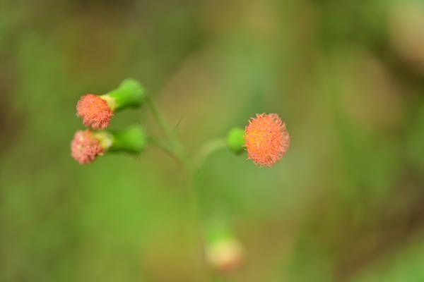 これはなんていう植物ですか?