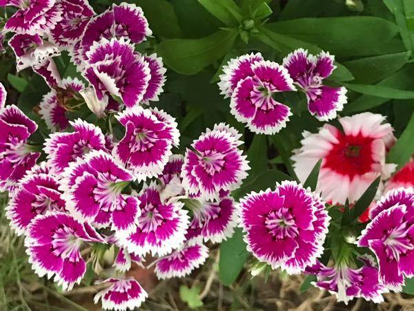 写真の花の名前を教えてください。