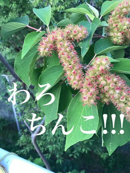 友達が送ってきたのですが、この植物はなんですか?