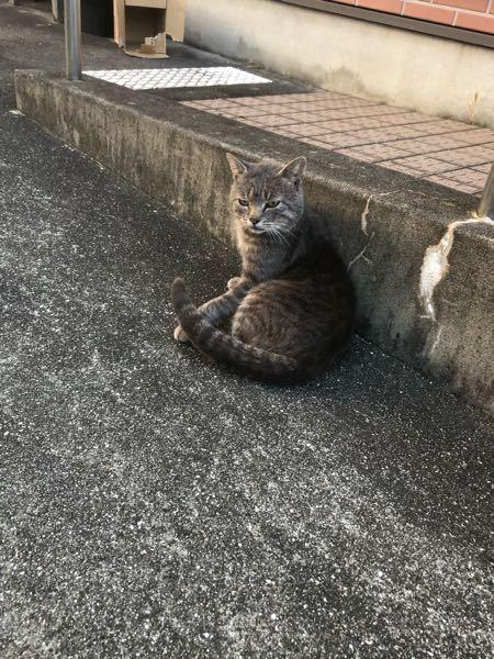 猫飼ったりして詳しい方におききしたいです。この野良猫は何才くらいですか?