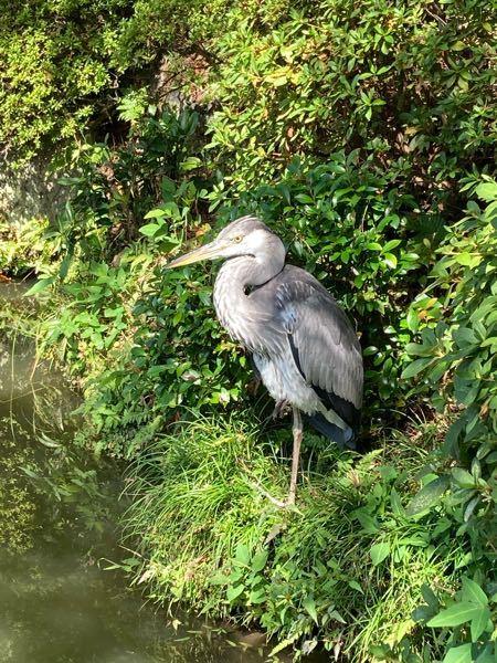 先日清水寺にいったら、片足立ちしているこの鳥を発見しました。名前のわかる方いらっしゃいますか?