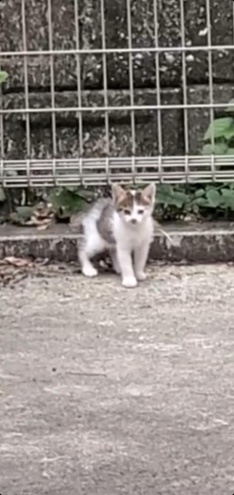 子猫がいました。 どれがベター? ・親猫に返したいので放置 ・保護して自分で飼う ・愛護センターへ渡す