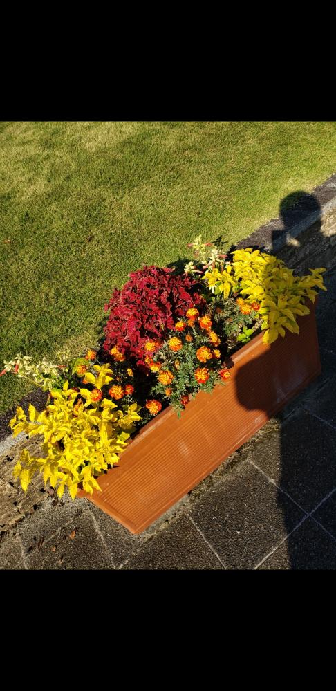 写真の寄植えに使われている花を教えてください!