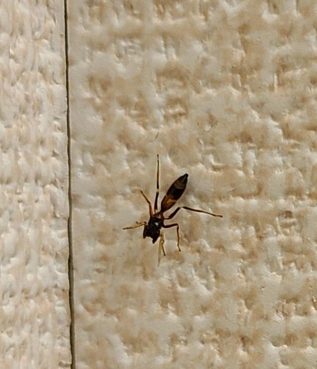 先ほど家で発見しましたが ヤガタアリグモですか? それ以外の害虫だと対策したいので 教えていただきたいです。