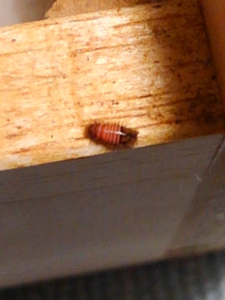 この虫の名前を知っている方がいらっしゃいましたら、教えてください。