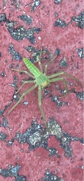 この虫何ですか?