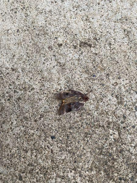 蛾だとは思うのですがこれはどんな種類の蛾でしょうか