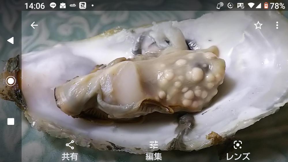 この牡蠣は病気? 何かに寄生されていますか? 牡蠣の詰め放題で買ってきた牡蠣を蒸して食べようと、殻を開いたら、中のひとつがこれでした。 気持ち悪いので、食べませんでしたが、これは一体なんなのか、分かる方おられますか?