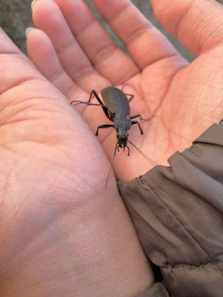 この昆虫は何ですか? 岐阜県恵那市で捕まえました。