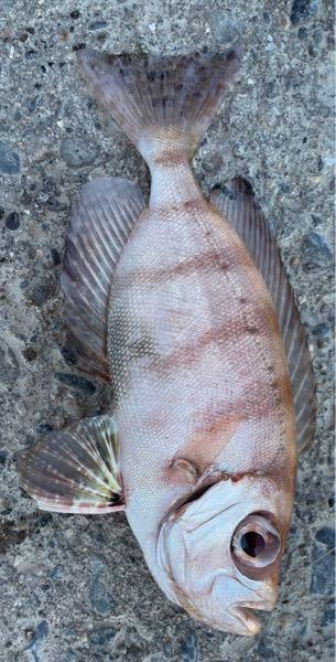 この魚はなんて名前ですか?