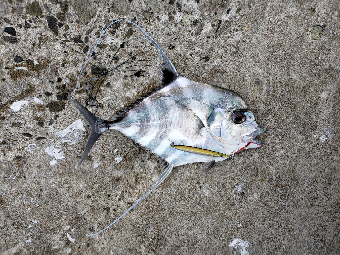 この魚、何ですか?