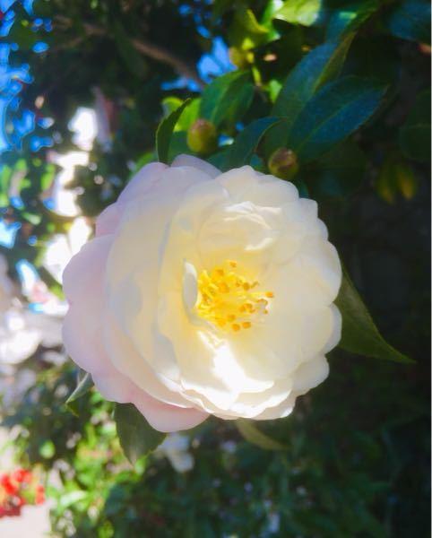 添付画像の植物の名前を教えてください。昨日撮影関西です。