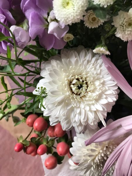この花の名前を教えて下さいよろしくお願いします。